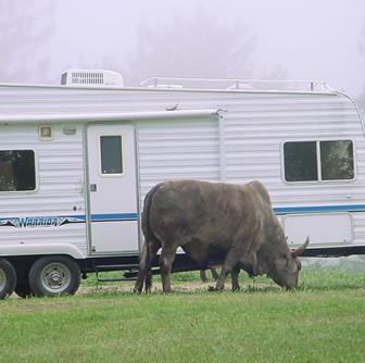 trailerbull
